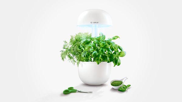jardin et potager d 39 int rieur intelligent bosch. Black Bedroom Furniture Sets. Home Design Ideas